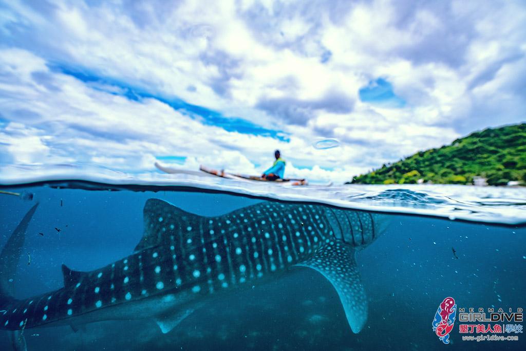 菲律賓,宿霧,鯨鯊,行程,自由潛水