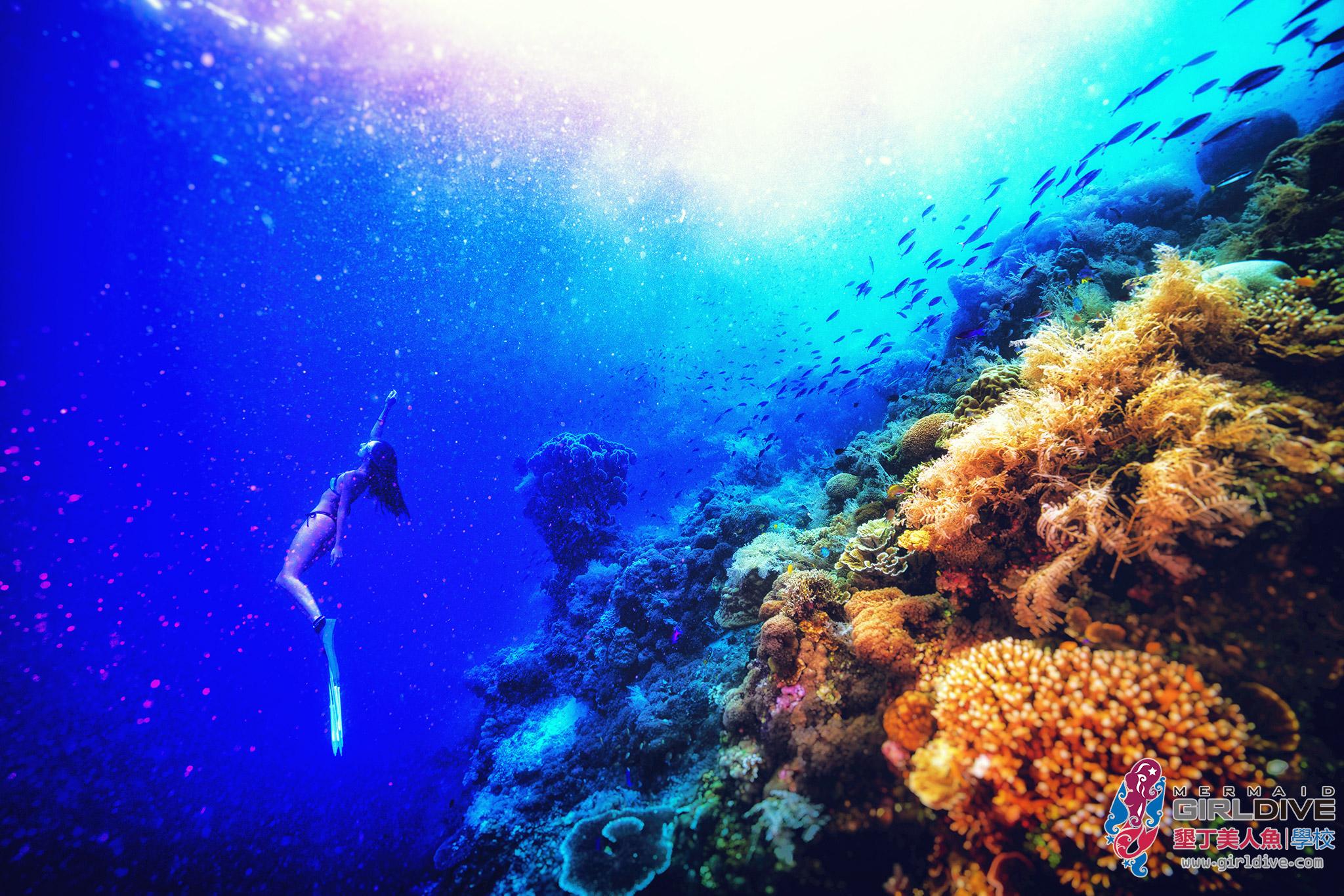 菲律賓,宿霧,寫真,自由潛水,行程