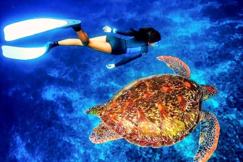 小琉球,海龜,海洋,保育,自由潛水
