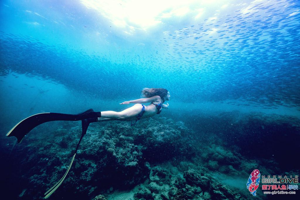 菲律賓,墨寶,沙丁魚,自由潛水,行程
