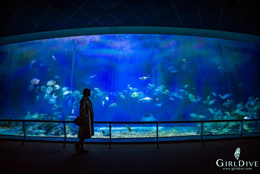 海生館,小白鯨,大洋池,企鵝,海豹,海洋生物,約會